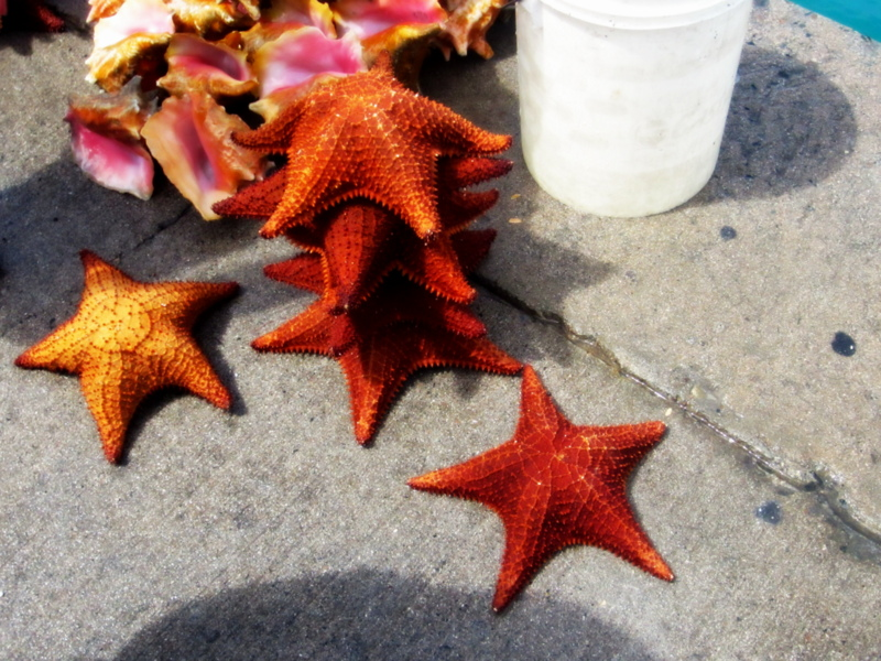 Starfish in Bahamas