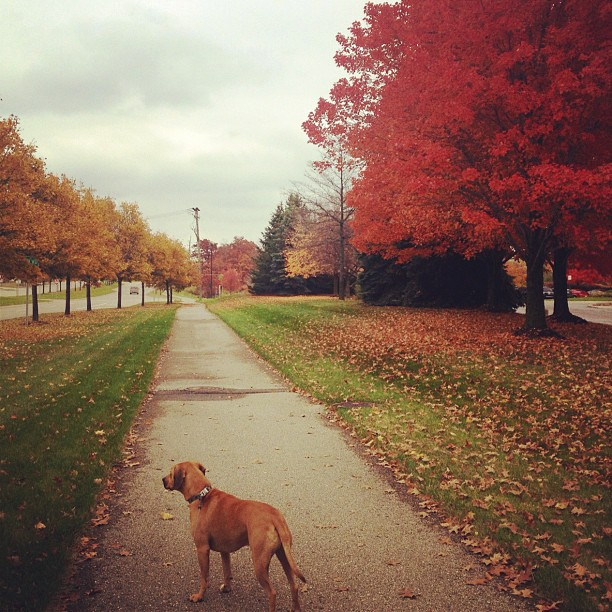 Afternoon Walk in Auburn Hills