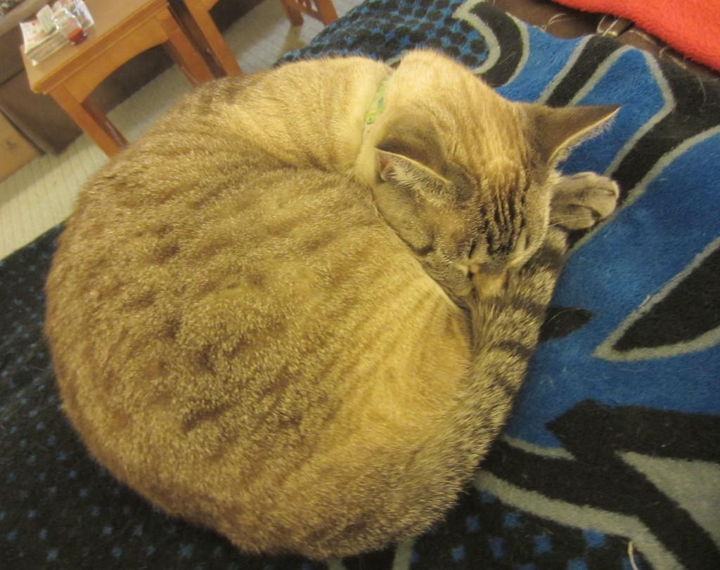 Aspen sleeping