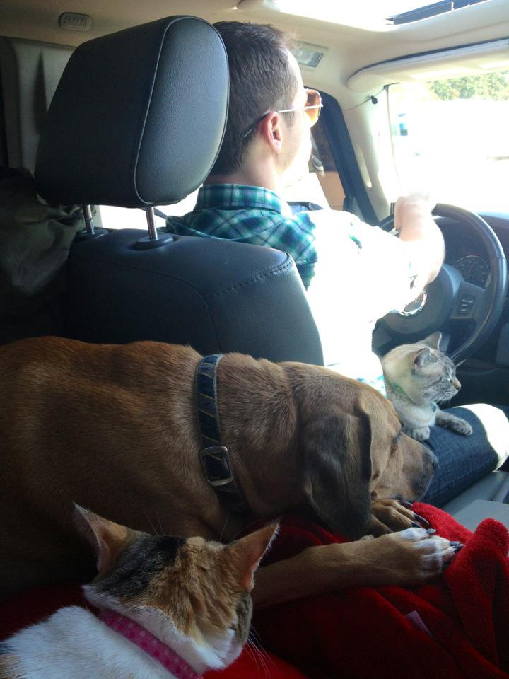 Driving on the road with pets