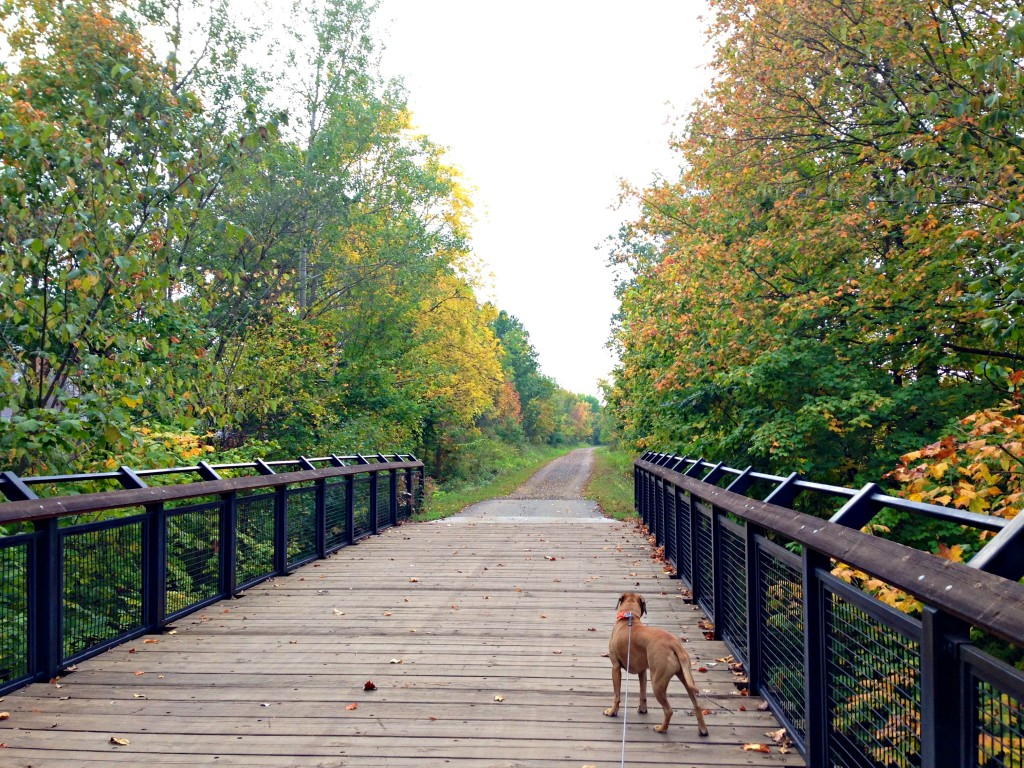 Fall runs with Roadie on trail