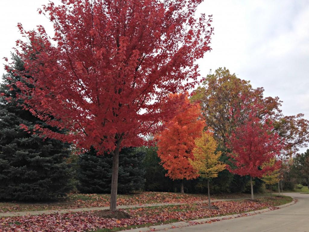 neighborhood trees in fall