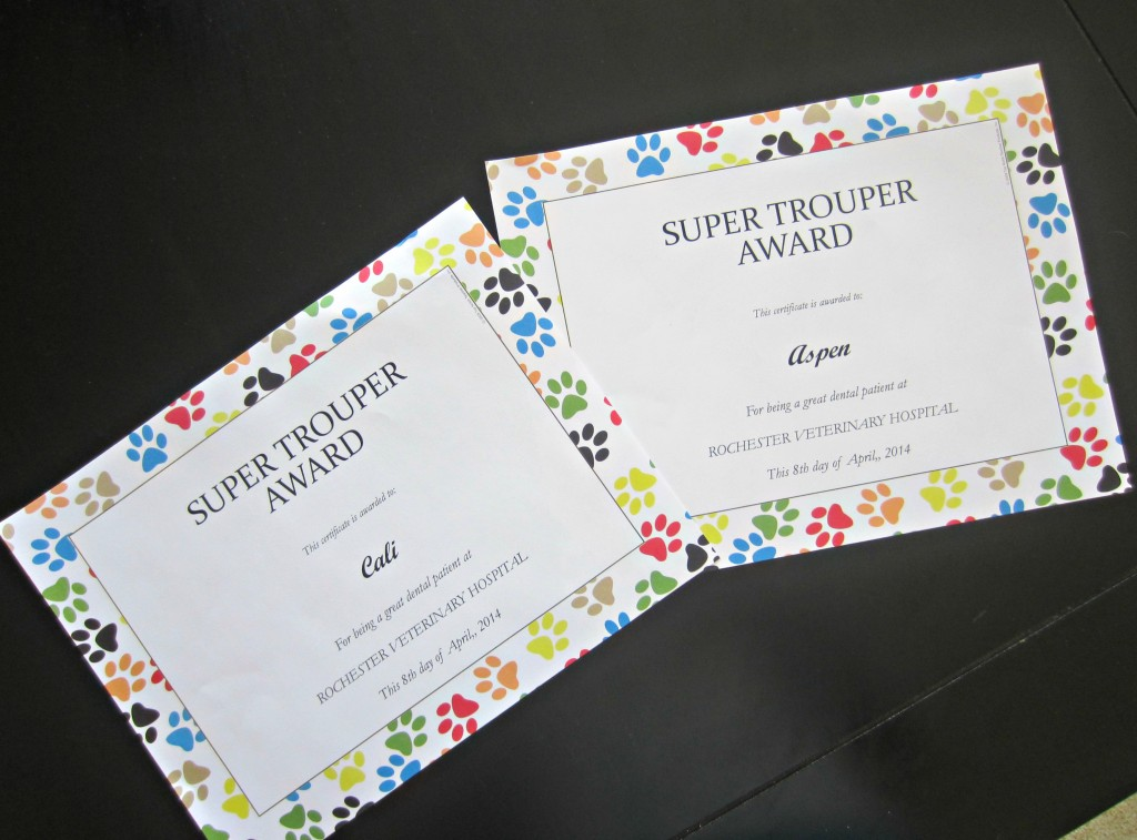super trouper vet award