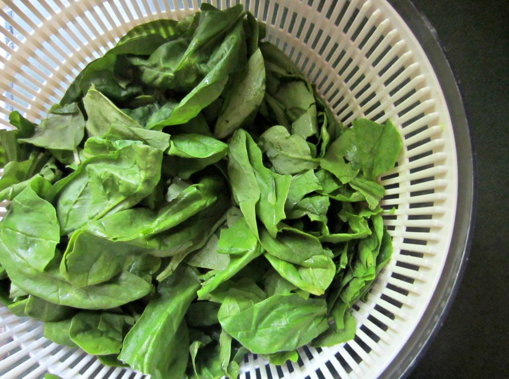fresh spinach in salad spinner