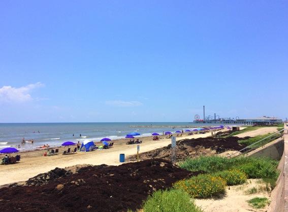 Galveston beach seawall beach jpg