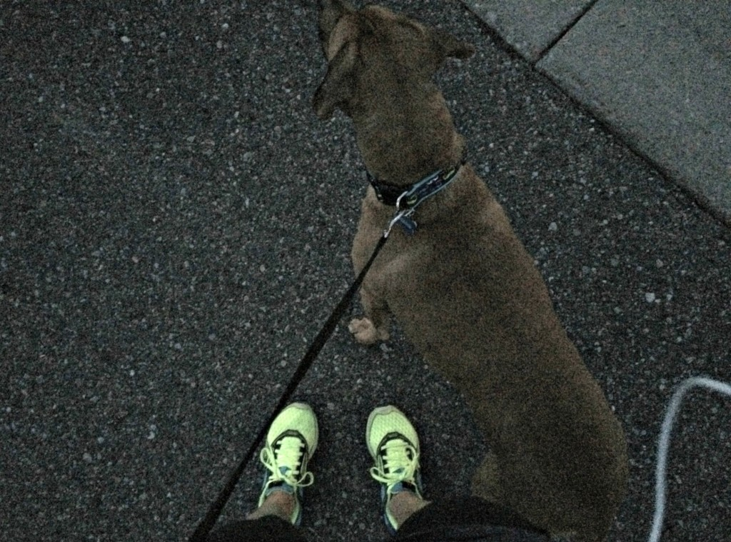running at night with Roadie
