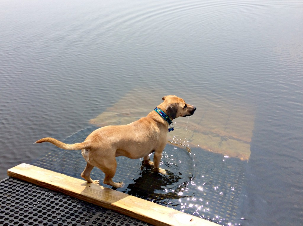 roadie doesn't swim.jpg