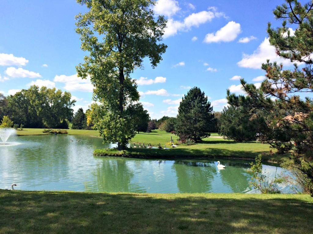 neighborhood pond and animals