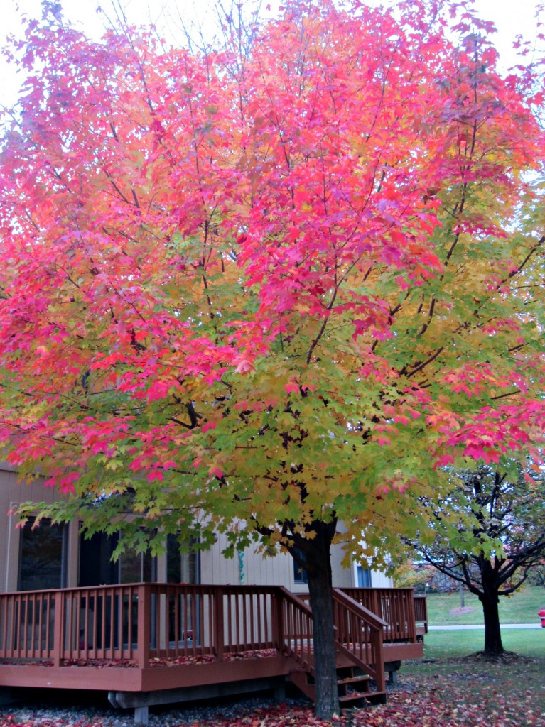 red and yellow trees fall 2014