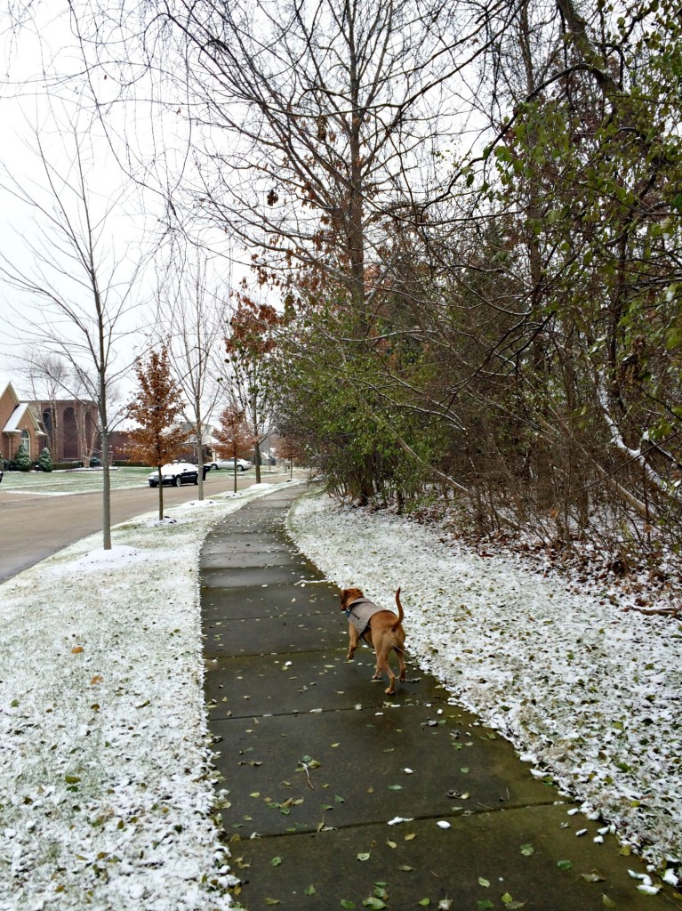 running in the neighborhood with roadie and snow