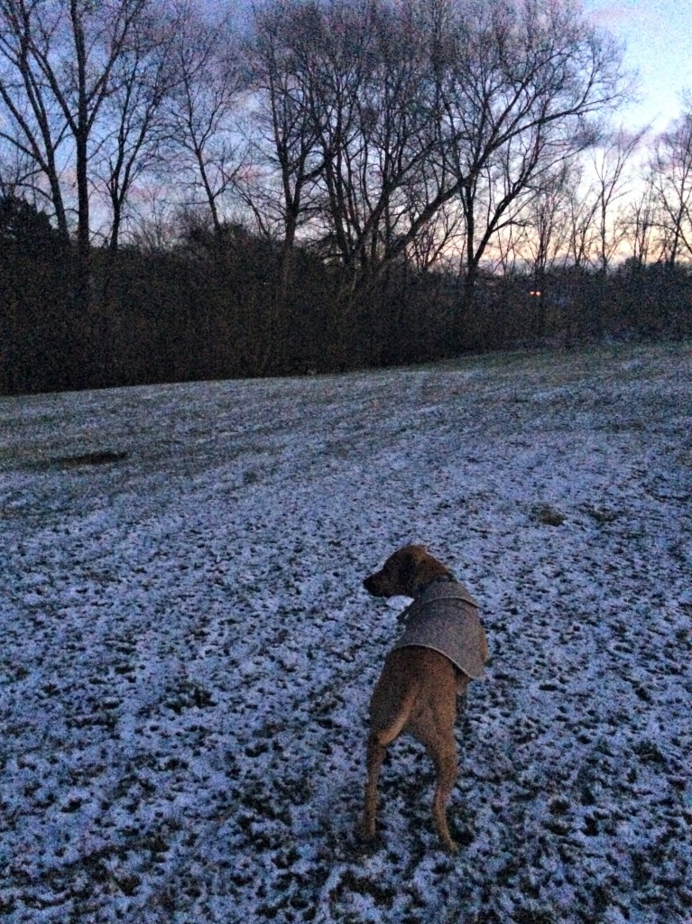 walking roadie in the snow