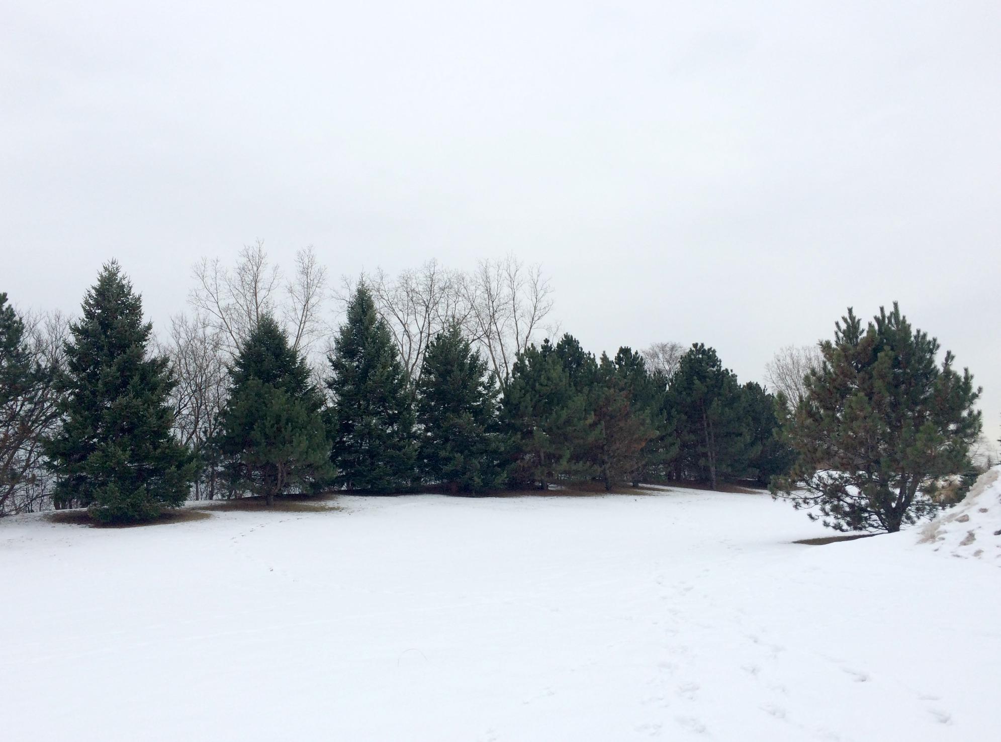 winter trees in michigan